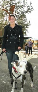 Elves and reindeer dogs gathered to march with Santa through Pine Mountain Village Saturday, Dec. 15.
