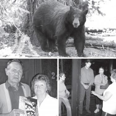 Top, young bear visiting El Camino Pines Campground this month?not the Goldilocks spotted at the Marvels and in other Pine Mountain homes recently. Bottom left, Tim and Bobbi Marvel are animal lovers who have had some unexpected night visitors that gave Bobbi quite a startle. Bottom right, Los Padres Bear Aware members listen to Bobbi Marvel (far right) relate how scared she was when the bear tried to break into her bedroom in the middle of the night. (l-r) Liz Bolden, Anders Hostmark, Judith Flannigan were understanding, as were other members of the group who had met earlier in the evening Tuesday, July 10. They were also concerned that the bear would be killed, as Bolden had been informed by Peter Cervantez, the USDA Wildlife Service trapper from Taft.