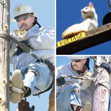'Voltage' the Cat Rescued After Days on Power Pole