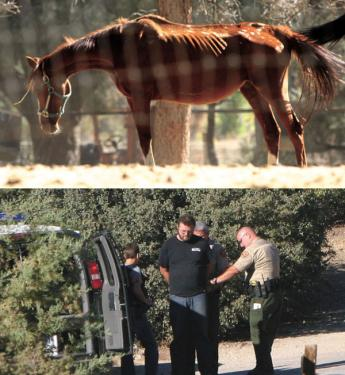 Top, an emaciated mare found at the Bor's Cochema Ranch last September. Below, Ernie Bor being arrested by Ventura County Sheriffs.
