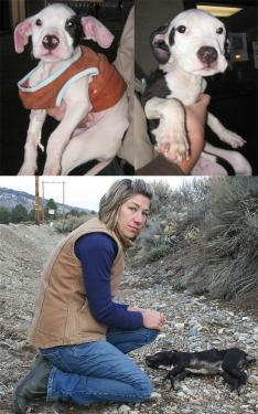 Above (l-r): These little ones have been named Comet and Vixen by the animal workers working to save their lives. Below: Tuesday, Tamara Cisek of Lockwood Valley found another dead puppy that looks as if it is from the same litter, by the side of the road.
