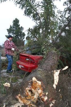 Neighbors Gilbert Oyos (left) and Allen Roe (right) work to cut a fallen tree away from a car crushed in high winds Wednesday morning. [Mountain Enterprise photo]