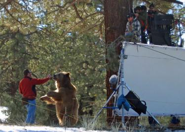 The camera crew at right is ready for the shot over the shoulder of the actor in the tree, looking down at the big Kodiak. The reflector is to make Baloo glisten in the sunlight. Baloo's trainers are Keith Bauers, Hayden Rosenaur and Scott Hadley.