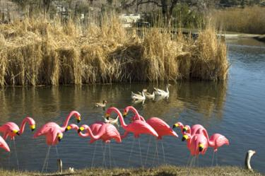 Rotary Flamingos Are Flocking the Mountain