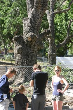 Frazier Park residents felt blindsided as Kern County approved what appeared to be a surprise action to kill two old oak trees at the library construction site on Saturday morning. Max Williams said the trees would likely be gone by the end of the day. [photo by Gary Meyer of The Mountain Enterprise]