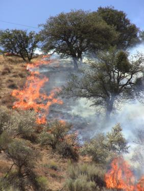 The Post fire rages up the hillside west of Lebec Road between No Name Rd and North Drive shortly after ignition on Tuesday, Aug. 24 [Mountain Enterprise photo]