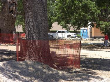 Fences appear June 29, around oak trees in the staging area across the street from the library building site. The fencing is within 12 inches of the tree's trunk. [The Mountain Enterprise photo]