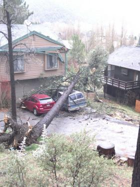 This pine was pulled out by the roots in a gusting wind Sunday morning at 7:30 a.m. It crushed a Suburban vehicle and damaged the corner of this home's roof, while pulling down electricity and phone lines on Cedarwood in Pine Mountain. No one was hurt. [Parsons photo]