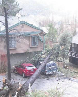Winds, Rain Bring Down Trees