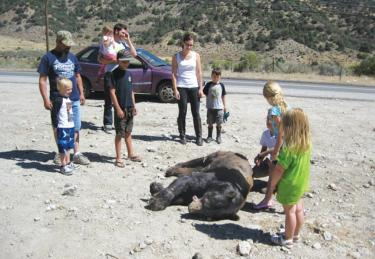 Bear Is Killed by Motorist