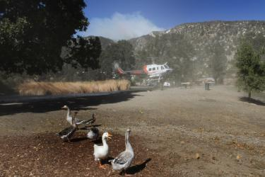 Chuck Noble caught this Frazier Mountain Park duck complaining to a goose about being chased from the pond by the firefighting helicopter. In the background you can see smoke from the fire to the north, on Tecuya Ridge. Noble used an 11mm lens, as he was coming from the new Frazier Park branch library opening Saturday, Oct. 22.