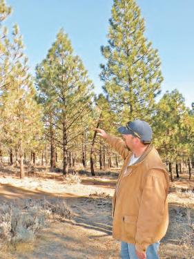 Frazier Mountain Forest Thinning Project Planned