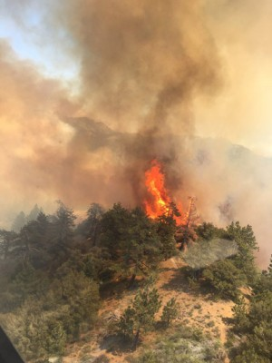 The pine fire rages within its still small footprint south of Lockwood Valley. [USFS photo]