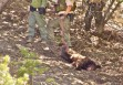 Cover-up? Killing of small bear raises big questions
