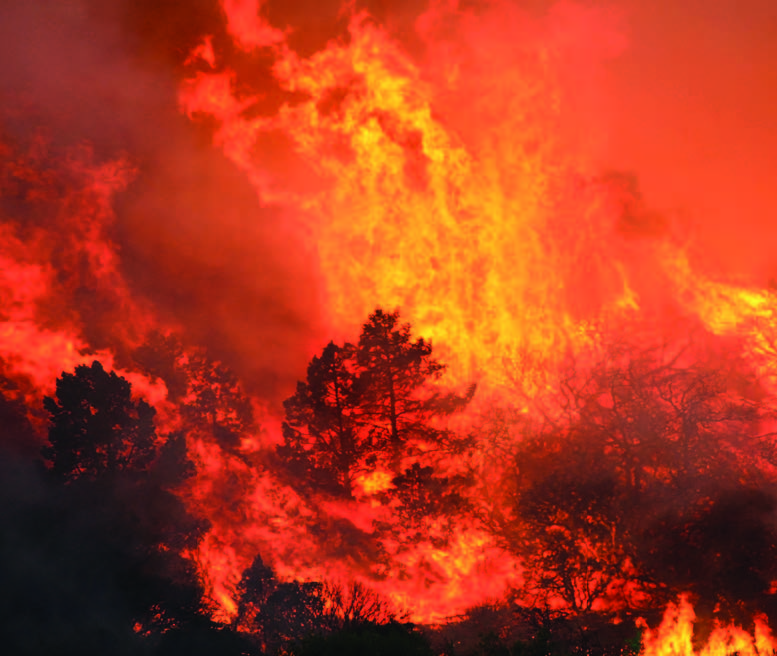 An inferno engulfs a pine tree. [Jeff Zimmerman photo]