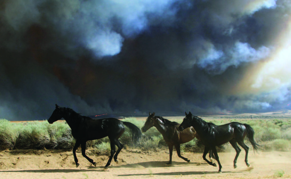 Horses at risk of being trapped by the Powerhouse fire were released by firefighters on Monday. The animals ran between 170th and 190th Streets West, where the First Solar Antelope Valley Solar Ranch 1 was threatened by the fire. Los Angeles County Animal Control came to help round up the horses. This photo is by Jeff Zimmerman, a retired U.S. Forest Service firefighter who lives in Neenach.