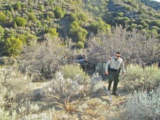 A deputy walks back up the southern slope of the hill, on the other side of the crest from the road. The car traveled up one slope, over the crest and down this slope to lodge in the vegetation below. [Gary Meyer photo]