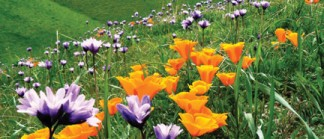 Poppies on Tejon Ranch [photo by Tejon Ranch Conservancy]