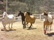Skill, beauty celebrated at PMC Festival of the Horse