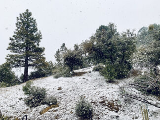The gentle snow-globe snowfall that began about 3:40 p.m. Sunday, March 1, 2020. A low pressure front blew in the precipitation from the Pacific. Click to see full size image. [Hedlund photo]