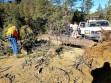 Woman knocks down tree on Mil Potrero Highway