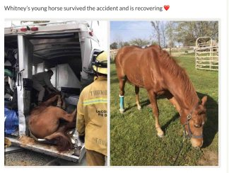 Vehicles were burned and strewn across freeway lanes, including (above) a horse trailer with three horses. One was killed; two others were injured. [photo on left by Cat Whitelock]. The sorrel horse shown in the trailer was injured, but is now recovering. See GoFundMe note in the story.