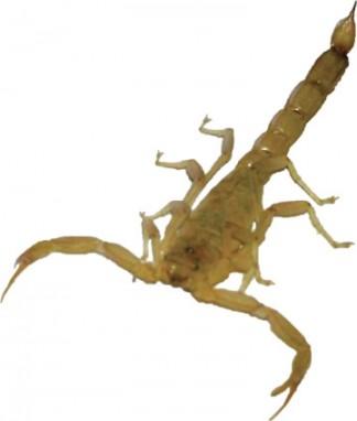 [photo by U.C. Davis Entomology Department]